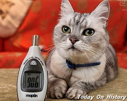 世界上最大的猫呼噜声 一般的猫高涨14倍