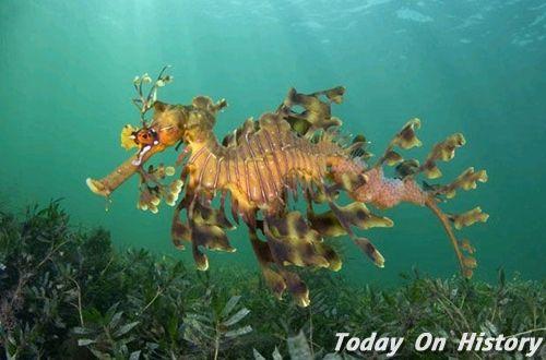 世界最为奇怪的动物 优雅的游客叶海龙