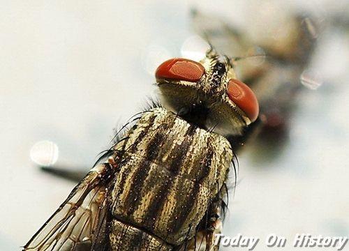 世界上飞得最快的昆虫 58公里/小时的马绳