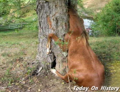 吃人树真的存在吗? 会吞噬人的树原来是这种!