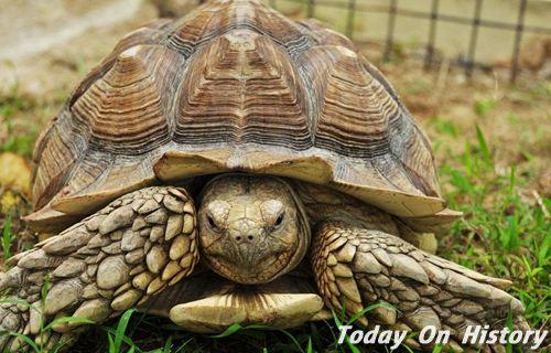 """""""王八""""为何成为乌龟的别称 """"王八""""是骂人的话吗"""